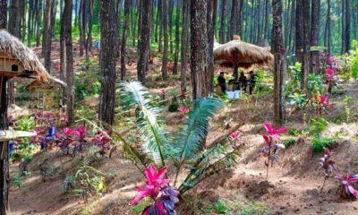 Wisata Alam Taman Ayu Gogoniti, Suguhkan Pemandangan Alam yang Masih Asri