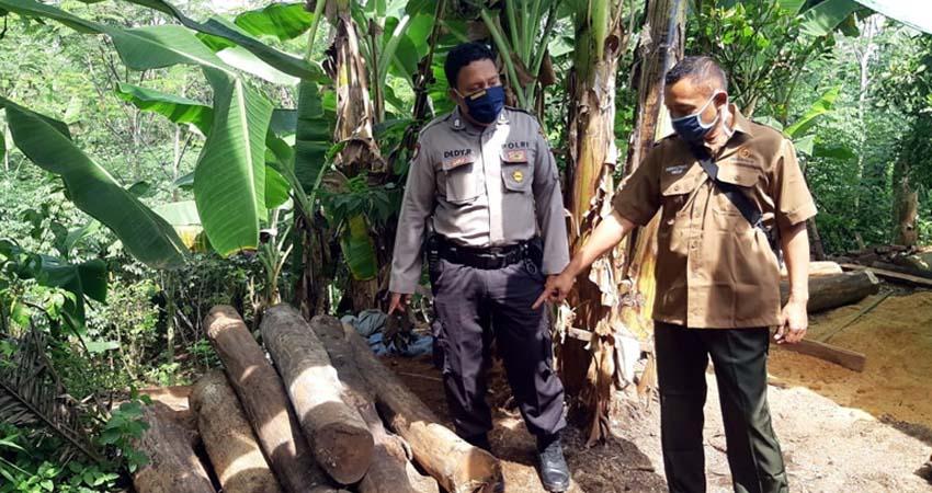 Petugas mengamankan barang bukti kayu jati hasil curian MS